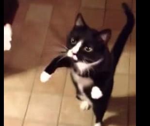 猫のゾンビ・ウォーク