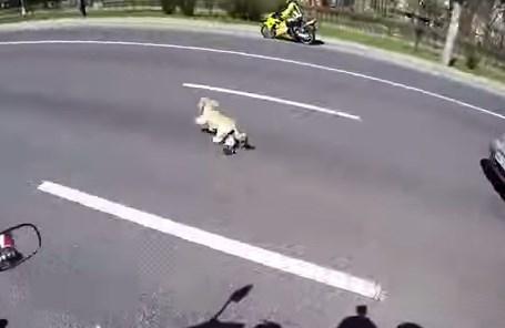 道路に逃げ出したワンコをバイク乗りが苦心の末捕獲に成功