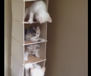 賑やかな猫マンション