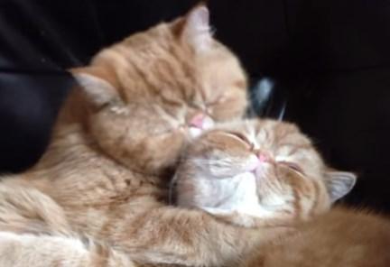 エスカレート気味な猫の愛情