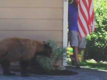 クマと人間がバッタリ出会った時の互いの反応