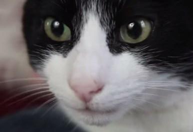 世界で最も大きなゴロゴロ音を出す猫、マーリン