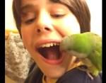 少年の乳歯を抜歯するオキナインコ
