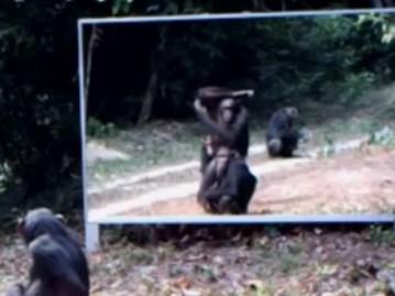 野生動物に鏡を見せるとどんな反応を示すのか