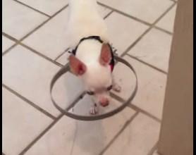 盲目 目が見えない 犬 バンパー