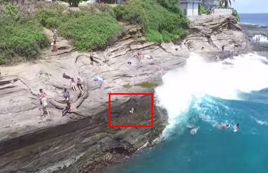 巨大な波にさらわれてしまったワンコ、救助され奇跡的に助かる