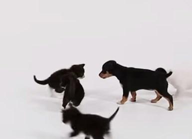 子犬と子猫の初めての顔を合わせ、どんな反応するのかな?