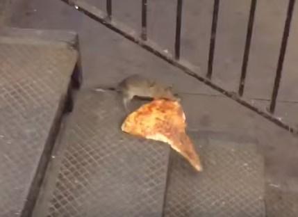 ピッツァを運ぶニューヨークのネズミ