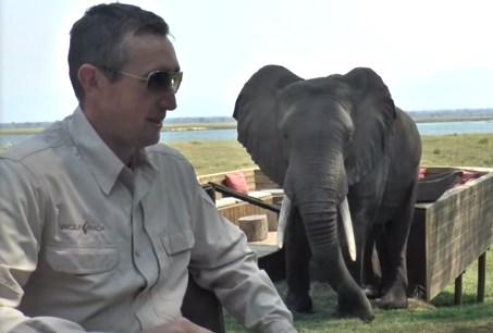 接近してきた野生のゾウを怒らせてしまった観光客