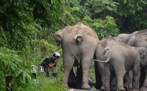 ゾウ群れを激しく怒らせてしまったバイクの男性