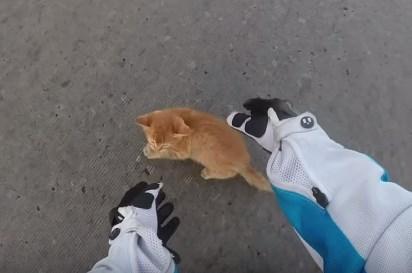交差点に子猫がっ危ない!バイクの女性による必死の救助