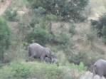 下り坂でゾウの赤ちゃんが転倒して一回転