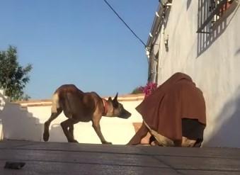 ワンコと感動の再会シーンで飼い主が姿を隠す