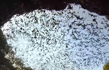 洞窟から飛び立つコウモリの大群をGoProで撮影した映像