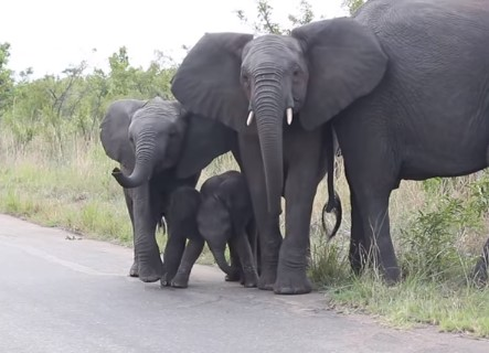 自分の鼻が気に入らなくてやけを起こす象の赤ちゃん