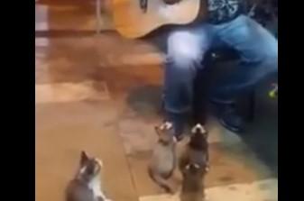 路上ライブの演奏に魅せられる4匹のニャンコ