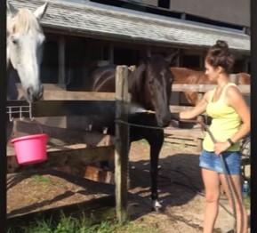 シャワーホースを独占したい馬の映像