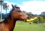 音のなる玩具で遊ぶ馬、こりゃ気に入った!
