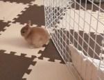 ウサギさん、どうやって脱出したのかな?
