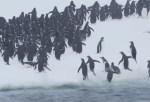 ペンギンが海からひたすらジャンピング上陸する映像