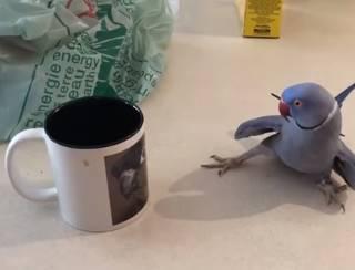 インコがコップの鳥に熱烈アプローチ