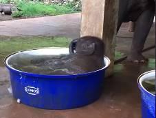 象の赤ちゃんが小さなプールで水浴び