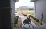 鹿の驚異的身体能力を見せつけられたワンコ