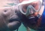 男性の髭をワシャワシャするマナティー