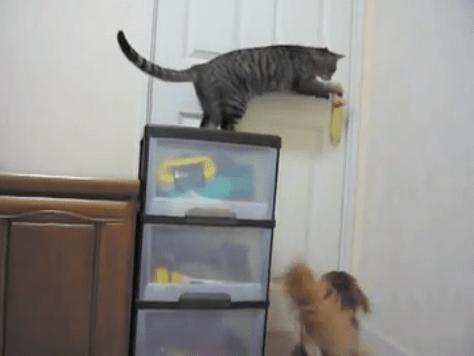 ネコにドアを開けてもらうワンコ