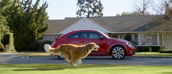 Γιατί οι σκύλοι κυνηγούν τα αυτοκίνητα;