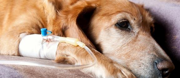 Ότι πρέπει να γνωρίζεται για το καρκίνο στους σκύλους