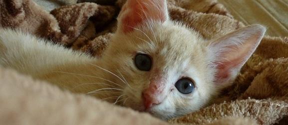 Οι πέντε πιο κοινές ασθένειες στα γατάκια