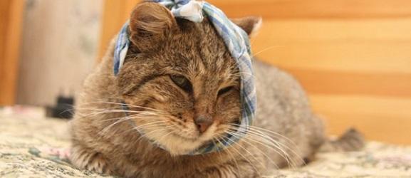 Animalcity.gr - Πως να φροντίσετε τη πληγή μιας γάτας
