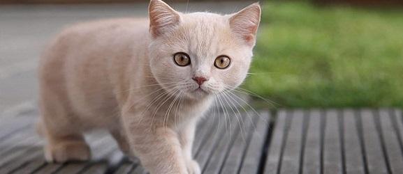 Animalcity.gr - Πόσο καιρό ζουν οι γάτες