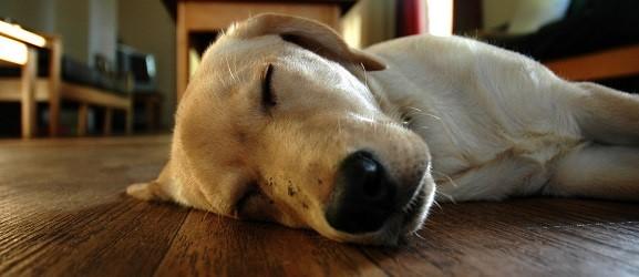 Animalcity.gr - Ονειρεύονται τα σκυλιά