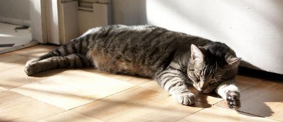 Animalcity.gr - Πως να κρατήσετε τη γάτα σας δροσερή το καλοκαίρι