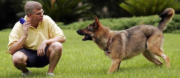 Τα είδη της εκπαίδευσης ενός σκύλου