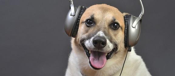 Ουρλιάζει ο σκύλος σας όταν ακούει μουσική;