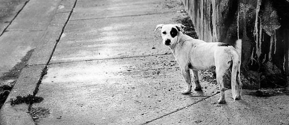 Animalcity.gr - Τι να κάνετε αν χάσετε ποτέ το σκύλο σας