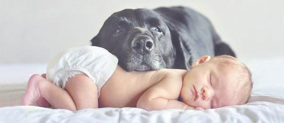 6 τρόποι που βοηθάει ο σκύλος με το μωρό