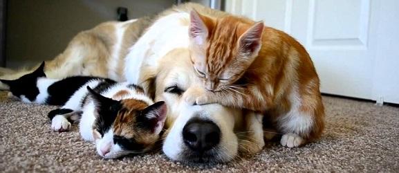 Animalcity.gr - Η μέση διάρκεια ζωής μιας γάτας έναντι του σκύλου