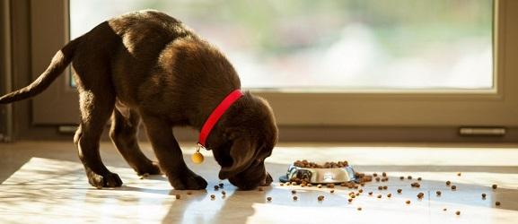 Μπορεί ένας σκύλος να ζήσει με γατοτροφή;