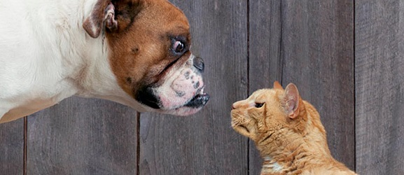Animalcity.gr - Τα πλεονεκτήματα του σκύλου ενάντια της γάτας