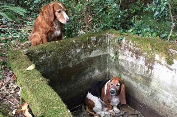 Animalcity.gr - Πιστός σκύλος φυλάει το παγιδευμένο του φίλο για 7 ημέρες 2