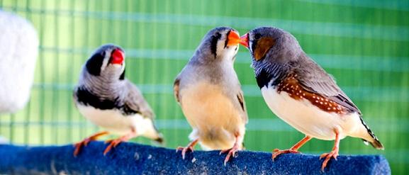 Τα οφέλη ενός κατοικίδιου πουλιού