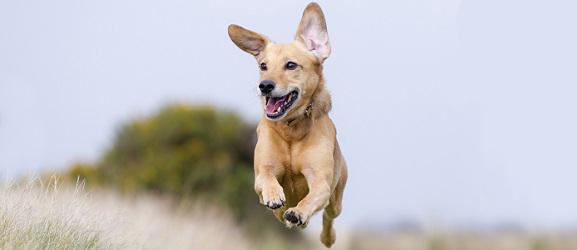 Animalcity.gr - Πως να ανακατευθύνετε έναν σκύλο