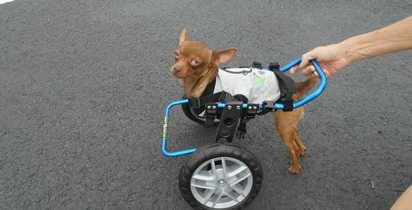 Animalcity.gr - Γνωρίστε τον Πίγουι, το κουτάβι που γεννήθηκε διαφορετικό 2