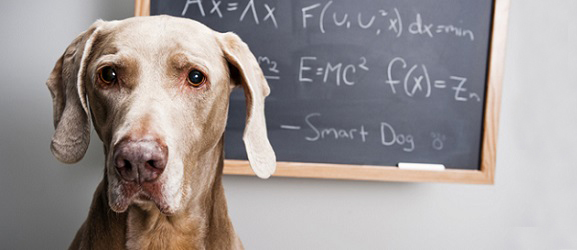 Animalcity.gr - Οι 10 πιο έξυπνες ρατσες σκυλων