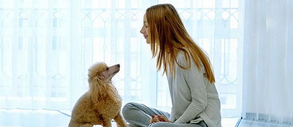 Animalcity.gr - Τι γνωρίζει ο σκύλος μου για μένα