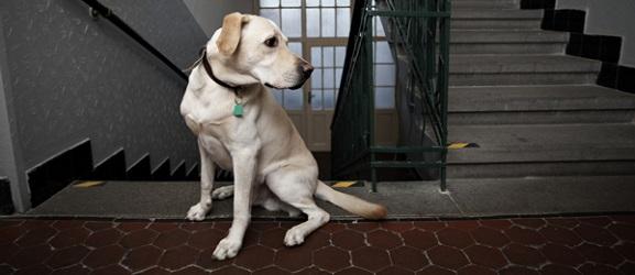 Τα 10 καλύτερα σκυλιά για διαμέρισμα